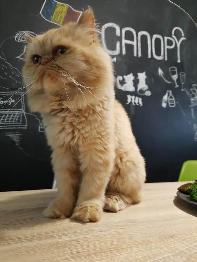 Mačka z Canopy